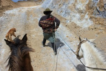 that mule ride